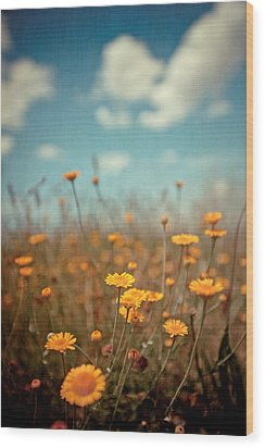 Daisy Meadow Wood Print by Boston Thek Imagery