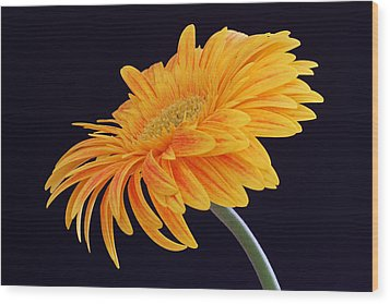 Daisy Of Joy Wood Print by Juergen Roth