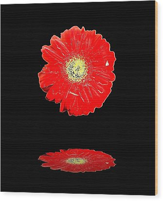 Wood Print featuring the photograph Daisy Reflection by Carolyn Repka