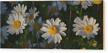 Wood Print featuring the photograph Daisy by Rima Biswas