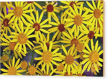 Daisys  Wood Print by Kami McKeon