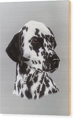 Dalmatian Wood Print by Patricia Ivy
