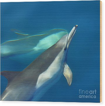 Dana Point Dolphins Ascending Wood Print