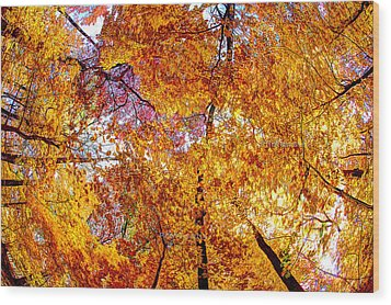 Dance Of The Autumn Trees Wood Print by Kimberleigh Ladd