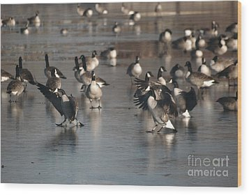 Wood Print featuring the photograph Dancing Geese by Mark McReynolds