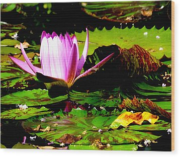Wood Print featuring the photograph Dancing Pink Water Lilly by Jodi Terracina