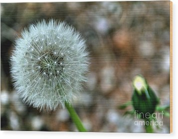 Dandelion Wood Print by Adrian LaRoque