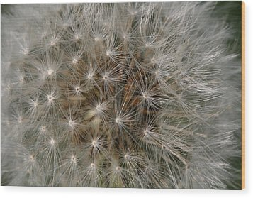 Dandelion Fairy Seeds Wood Print by Peg Toliver