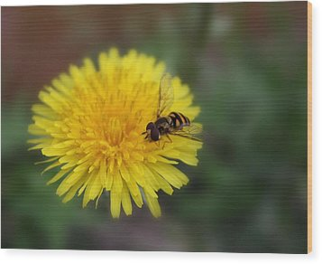 Wood Print featuring the photograph Dandelion For Dinner by Lynnette Johns