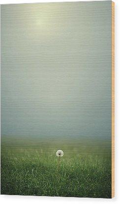 Dandelion On Meado Wood Print by Elisabeth Schmitt
