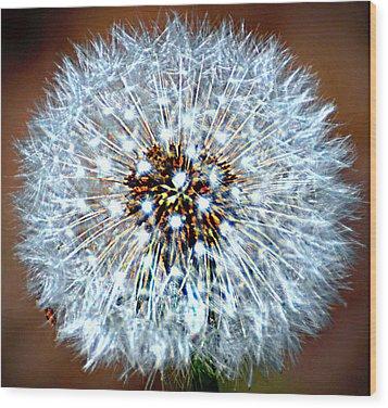 Dandelion Seed Wood Print by Marty Koch