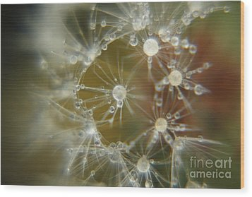 Dandelion Seeds Wood Print by Yumi Johnson