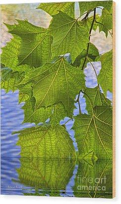 Dangling Leaves Wood Print by Deborah Benoit