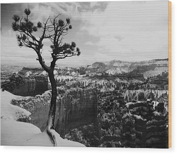 Dan's Eye View Of Bryce Wood Print