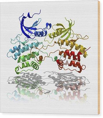 Dapk3 And Pyridone 6 Proteins Wood Print by Laguna Design