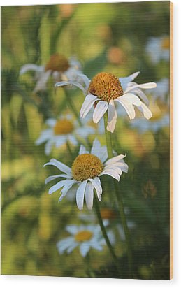 Wood Print featuring the photograph Dapper Daisies by Kathleen Holley