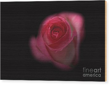 Wood Print featuring the photograph Dark Rose by Michael Waters