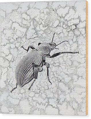 Darkling Bug Wood Print by Inger Hutton