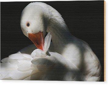 Darling Duck Wood Print by Paulette Thomas