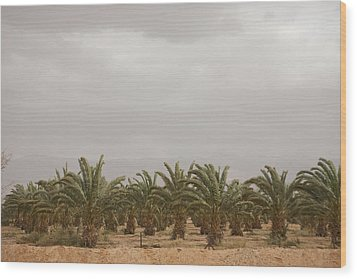 Date Palm Trees In An Orchard Wood Print by Taylor S. Kennedy
