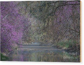 Davis Arboretum Creek Wood Print by Diego Re