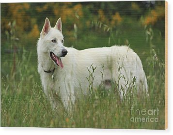 Wood Print featuring the photograph Day At The Dog Park by Tyra  OBryant