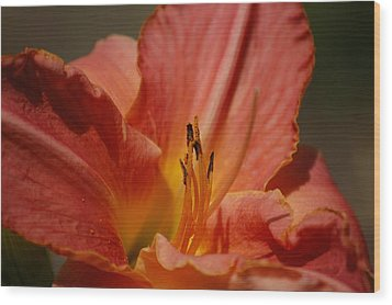 Daylilly Wood Print by Randy J Heath