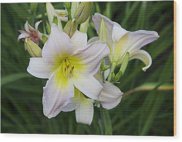 Daylily 1 Wood Print by Michel DesRoches
