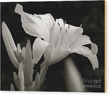 Daylily Study In Bw Iv Wood Print