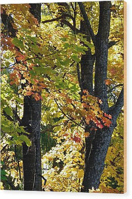 Dazzling Days Of Autumn Wood Print by Will Borden