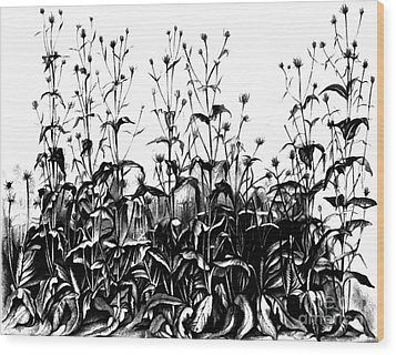 De Vries Experimental Garden Wood Print by Science Source