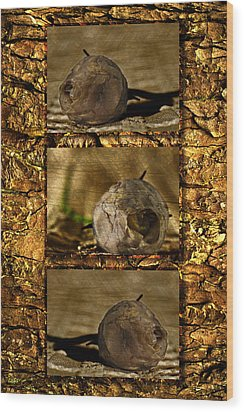 Wood Print featuring the photograph Dead Rosebud Triptych by Steve Purnell