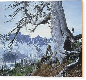 Dead Spruce In Old Forest Fire, Nabob Wood Print by David Nunuk