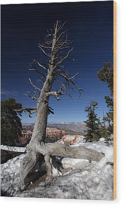 Wood Print featuring the photograph Dead Tree Over Bryce Canyon by Karen Lee Ensley