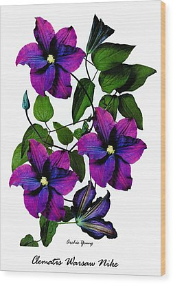 Deciduous Climber (clematis Warsaw Nike) Wood Print by Archie Young