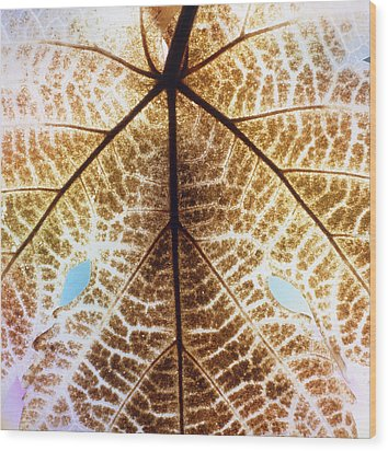 Decomposition Of Leaf Of A Grape Vine Wood Print by Dr Jeremy Burgess