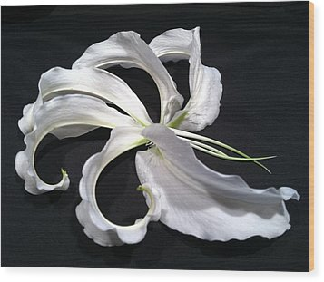 Deconstructed Lily Wood Print by Anna Villarreal Garbis