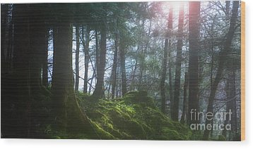 Deep Forest Wood Print by Bruno Santoro