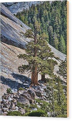 Deep Roots Wood Print by Bonnie Bruno