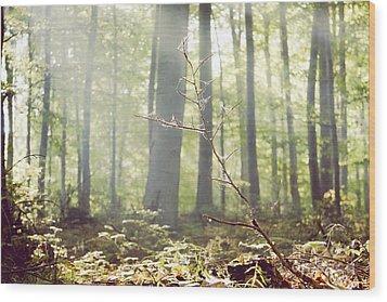 Deep Wood Print by Violet Gray