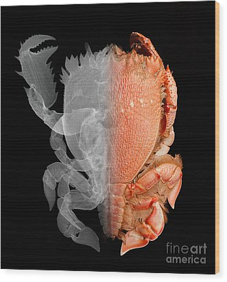Deep Water Crab X-ray And Optical Image Wood Print by Ted Kinsman