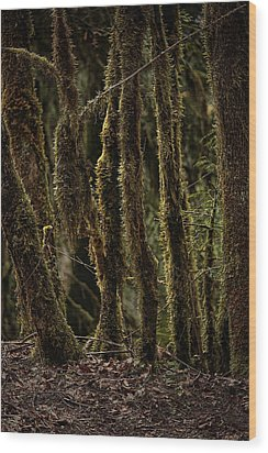 Deep Woods Wood Print by Bonnie Bruno