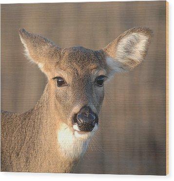 Deer At Dusk Wood Print