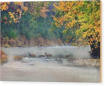 Deer Crossing River Wood Print by Dan Friend