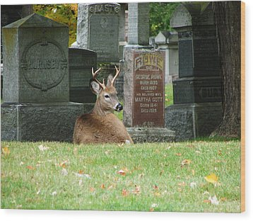 Wood Print featuring the mixed media Deer In Cemetery by Bruce Ritchie