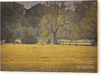 Wood Print featuring the photograph Deer In Spring Meadow by Cheryl Davis