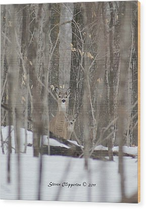 Wood Print featuring the photograph Deer In Woods by Steven Clipperton