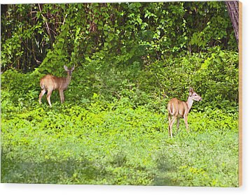 Deer On The North Of St. Croix Wood Print by David Alexander