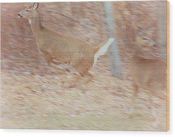 Deer On The Run Wood Print by Karol Livote