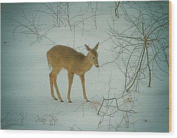 Deer Winter Wood Print by Karol Livote